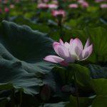 台湾とコロナと仏教の話
