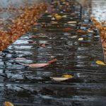 秋の雨と夏の虫